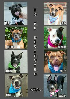 🔴🔴🔴🔴🔴THURSDAY 9-1-16 KILL LIST IS OUT FOLKS PLEASE SHARE💥NOW💥AVAILABLE @NYCDOGS.URGENTPODR.ORG 🔴🔴🔴🔴