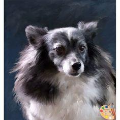175 best papillion dog images on pinterest papillion dog little papillion dog portrait 284 solutioingenieria Images