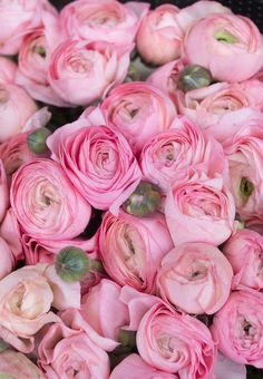 Paris Photography, Pink Ranunculus for sale in Paris, France, nature decor, baby pink wall art, Pari