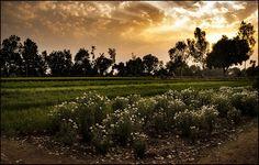 on discernment of the barefoot… Bapcha village, Agar district, Malwa plateau, Madhya Pradesh, India…