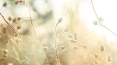 """#DOCUMENTAL #FILM #PELICULA #CROWDFUNDING - Hoy es primavera by Nina da Lua & Álvaro Sanz. """"Hoy es primavera"""" está inspirado en una historia real de Nina da Lua (Sonia Carmona) a quien le detectaron un sarcoma d'Ewing en 2011. Es un relato visual, captado de forma intimista por Álvaro Sanz, que comparte los aprendizajes de un proceso de superación lleno de Naturaleza y Vida.  +INFO www.dealvarosanz.com/portfolio CAMPAÑA crowdfunding verkami www.verkami.com/projects/2676"""