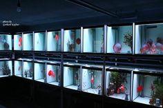 Aquarium Shop, Discus Aquarium, Discus Fish, Aquarium Design, Betta Tank, Fish Tank, Fish Breeding, Fish Farming, Axolotl