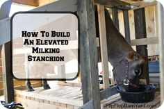 How To Build An Elevated Milking Stanchion. This is a raised milk stanchion. Raising Cattle, Raising Goats, Raising Chickens, Homestead Farm, Homestead Survival, Goat Care, Future Farms, Goat Farming, Backyard Farming