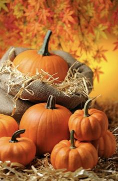 Fall Images, Fall Pictures, Pumpkin Pictures, Fall Background, Thanksgiving Wallpaper, Pumpkin Farm, Fall Wallpaper, October Wallpaper, Autumn Scenes
