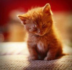 18 Kittens Who Couldn't Keep Their Eyes Open - We Love Cats and Kittens More