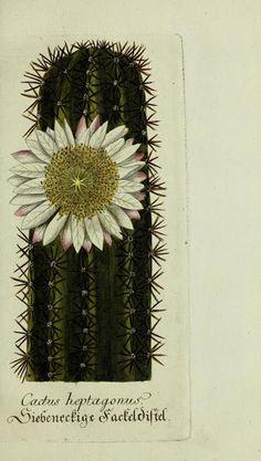 Edicion Especial: Cactus