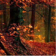 Őszi táj színes levél