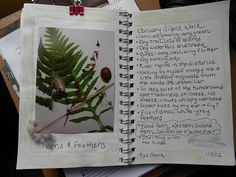 Pages from a nature journal