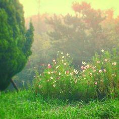 【takamitsu_tonihara】さんのInstagramをピンしています。 《#霧 #朝 #コスモス #秋桜 #葉山町 #葉山歩き #緑 #自然 #朝焼け #森 #天気回復  #fog #morning #cosmos #forest #nature #japan #hayama #instalike #instagood #ig_lovelynature #instagram #loves_landscape #loves_nature #green #woods #highland》