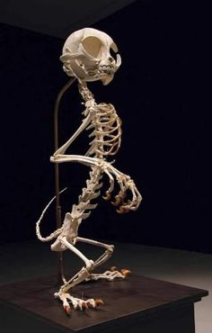 This is neat! Cartoon character skeletons! Fun!