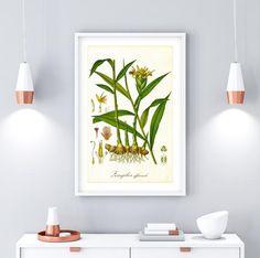 Hops Plant, Herb Wall, International Paper Sizes, Botanical Illustration, Botanical Prints, Botany, Original Image, Printable Wall Art, Wall Art Prints