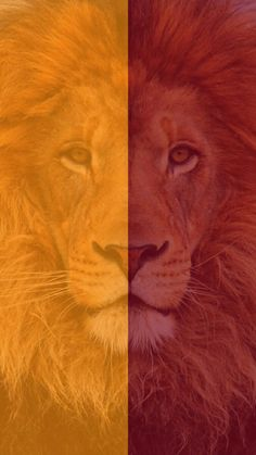 Galatasaray duvar ka d sar k rm z aslan rm z k rm z - red yellow lion Abstract Geometric Art, Man Wallpaper, Football Wallpaper, Lions, Yellow, Pictures, Painting, Sports Channel, Wallpapers