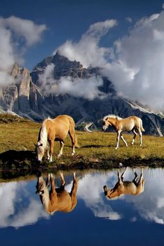 Close to the clouds by Darko Geršak. Palomino horses by a mountain pond