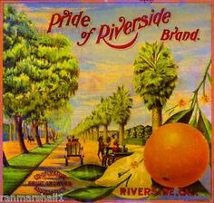 vintage fruit lables riverside california | Riverside-California-Pride-of-Magnolia-Orange-Citrus-Fruit-Crate-Label ...