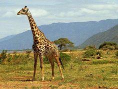 animales-de-la-selva-22211