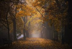 Autumn - lensbaby edge80