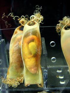Shark eggs....  Can these aggs actually survive out of their mothers' bodies??