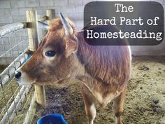 Do you struggle with the thought of eating your homestead animals?