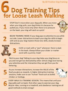 Tips on Loose Leash Training.People always ask us what tips we have when it comes to leash training, especially with puppies. We found this great picture with 6 tips on how to help your dog with loose leash training! Pet Dogs, Dogs And Puppies, Pet Vet, Dogs 101, Baby Puppies, Positive Dog Training, Dog Care Tips, Pet Care, Dog Training Tips