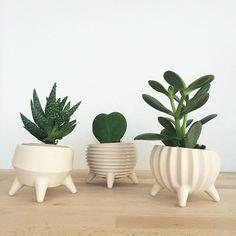 Des #potafleurs pour vos cactus : imprimez les en #3D ! #impression3D #deco #maison @cults3d