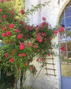 Week-end au vert du côté de Blois  #happysunday #flowerpower