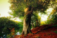 Baum, tree, boom