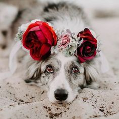 Interview: Artist Designs Custom Floral Crowns for Your Beautiful Pets Flower crown pet accessories by Freya's Floral Company Pretty Animals, Cute Funny Animals, Cute Baby Animals, Animals And Pets, Cute Dogs Breeds, Cute Dogs And Puppies, Dog Breeds, Doggies, Beautiful Dogs