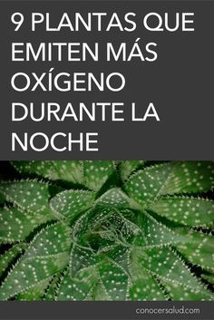 9 Plantas que emiten más oxígeno durante la noche #salud