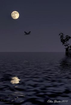 *Moon Reflection