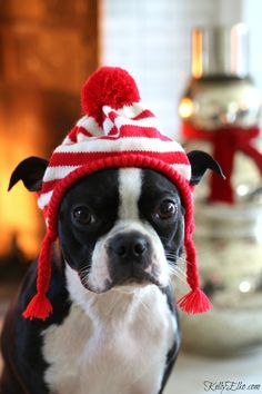 Sushi the Boston Terrier welcomes you to my cozy Christmas home tour kellyelko.com
