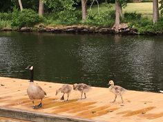 Boating, Kangaroo, Sailing, Bird, Animals, Baby Bjorn, Candle, Animales, Ships