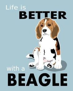 Life is better with a Beagle. {Ain't it the truth?}