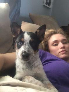 My puppy Skye! Jack Russell terrier and blue heeler mix.