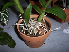 How to Care for Orchids: 18 steps (with pictures) - wikiHow