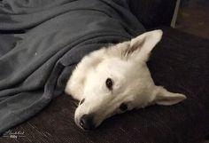 So lernt euer Hund sich in aufregenden Situationen zu entspannen.