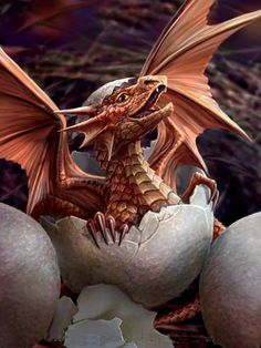 "First Flap by Anne Stokes. ""Anne Stokes- Artist"" First Flap van Anne Stokes. Dragon Egg, Baby Dragon, Red Dragon, Dragon Born, White Dragon, Magical Creatures, Fantasy Creatures, Fantasy Wesen, Anne Stokes"