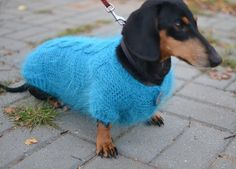 Dog Sweater Clothes Hand Knitting turquoise fluffy cable dachshund medium dog Mohair from on Etsy. Saved to Clothes for pets HANDMADE. Dachshund Sweater, Dachshund Clothes, Dachshund Love, Pet Clothes, Daschund, Knitted Dog Sweater Pattern, Knit Dog Sweater, Dog Sweaters, Animal Sweater