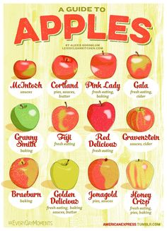 Guide To Apples ~ This handy guide outlines 12 different apple varieties for you. Save this handy guide for the next time you're buying ingredients for that apple pie... go with a combination of two kinds of apples.
