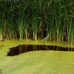 Top 7 Algae Benefits that May Surprise You