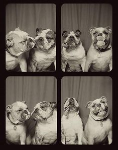 Dit gebeurt er als je honden in een fotohokje zet - Froot.nl