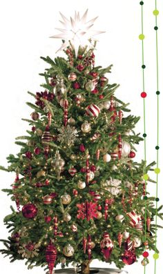 LIVE CHRISTMAS TREE TIPS