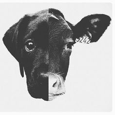 Erase the dividing line of care and concern. Go vegan today. Mercy For Animals, Vegan Tattoo, Amor Animal, Vegan Quotes, Vegetarian Quotes, Why Vegan, Stop Animal Cruelty, Vegan Animals, German Shorthaired Pointer