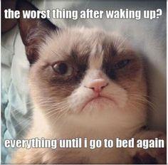 Grumpy Cat - waking up
