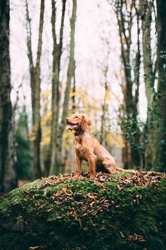 9333dd7b0a4aee How owning a dog can change your life for the better Dog Health Tips