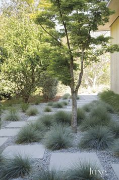 Modern side yard landscape with staggered paver path and carefully placed landscaping.