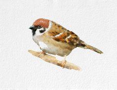 Sparrow Watercolor Painting Art Print Bird watercolor black grey white brown Home Decor Wall Decor Kitchen Decor Beach Decor