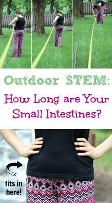 Human Body Science, Human Body Activities, Human Body Unit, Human Body Systems, Preschool Science, Middle School Science, Elementary Science, Science Education, Teaching Science