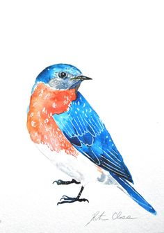 Watercolor Painting Bird Painting Original Bluebird by WoodPigeon, $25.00