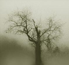 Tree photography by Scherer Art