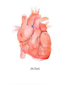 This is a stunning print of an anatomically accurate human heart watercolor. NAME: The Human Heart PRINT: The print will come on Archival Matte Paper,